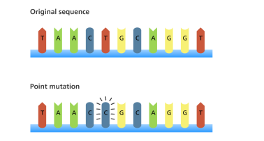 dna_mutations_point_mutation_yourgenome